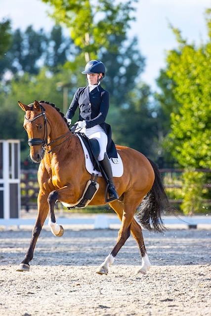 Colt Sollenburg U25 horse horse auction