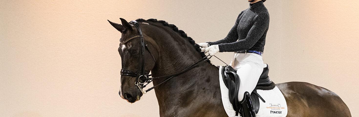 dressage horses Excellent Dressage Sales
