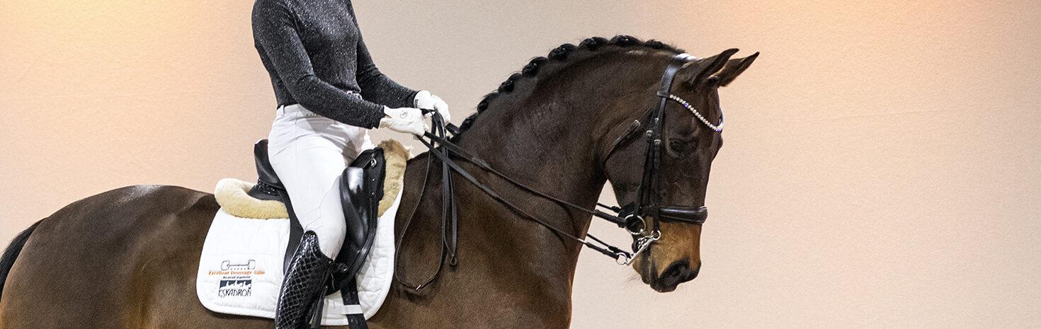 Excellent Dressage Sales dressuurpaarden veiling