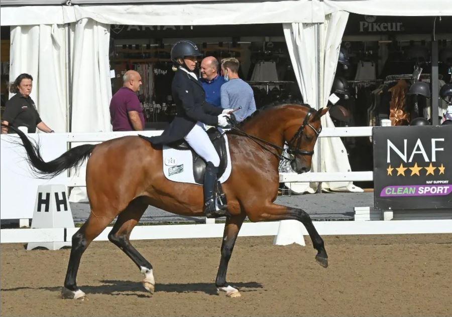 dressage horse for sale Rockstar